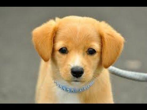 ギネスに載った世界一賢い犬。