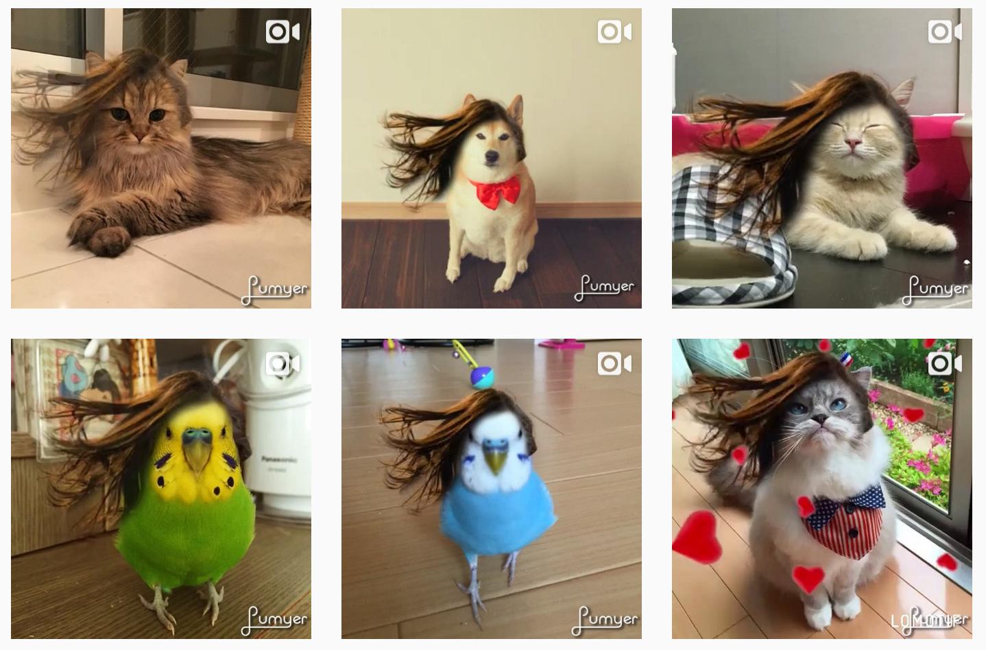 まるでティモテ。写真加工アプリLumyerで猫の髪もさらさらに
