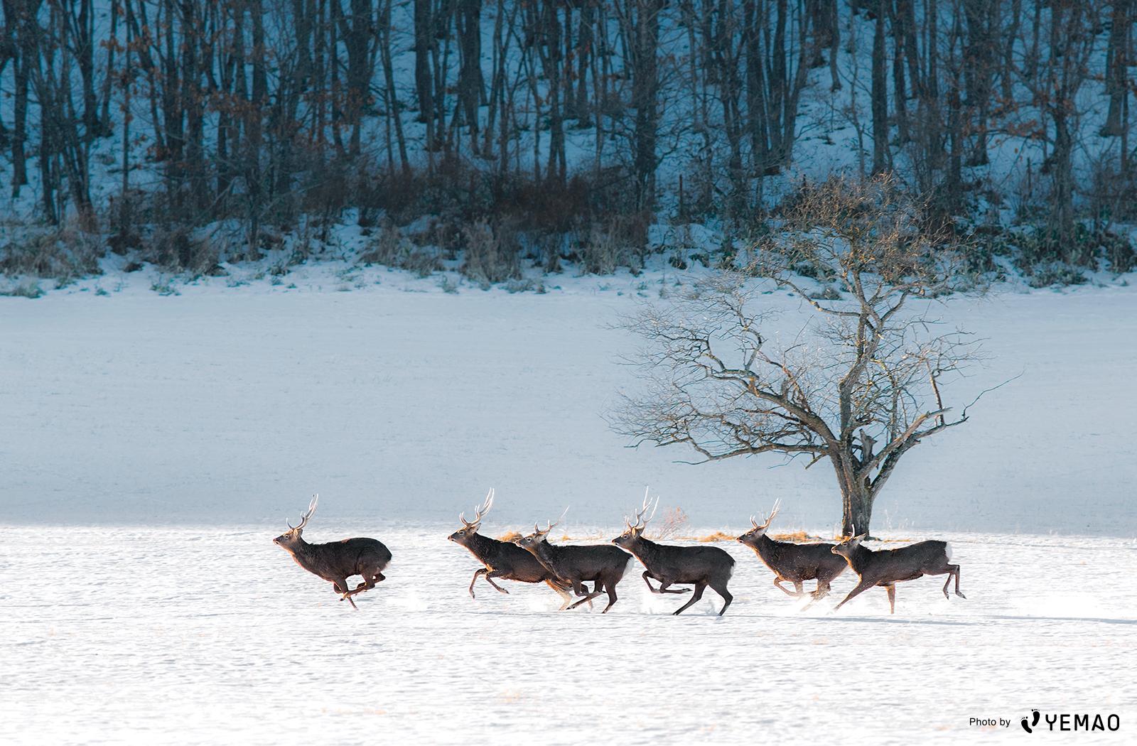 壁紙プレゼント 知床半島の 冬景色 写真6選 Starthome